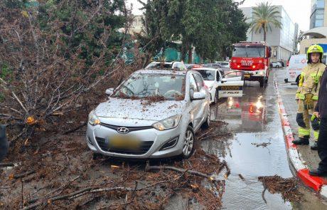 נזקי הסערה: עץ קרס על רכב